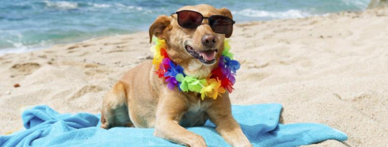 Hotel a Rimini con spiaggia convenzionata per cani e gatti. Vacanza a Rimini con cane e gatto